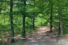 A murvás útról letérve kb. 200 méter sétával érjük el a tisztást.