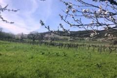 Cseresznyevirág kerékpárút