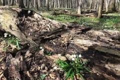 Tőzikés tanösvény a Dobogó-erdőben