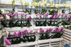 Dobronak, Orchideafarm