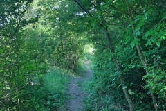 A tanösvény erdei szakasza