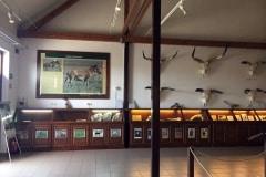 Kiállítás a vadasparkban
