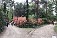 rododendronviragzas_jeli_arboretum-10