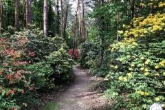 rododendronviragzas_jeli_arboretum-5