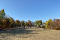 Normafa ősszel