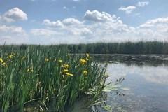 Motorcsónakos túra a Tisza-tónál