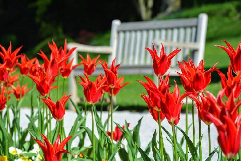 2 millió tulipán nyílik a Ljubljanához közeli arborétumban