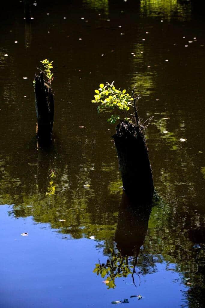 A Hubertlaki-tó, avagy a bakonyi Gyilkos-tó