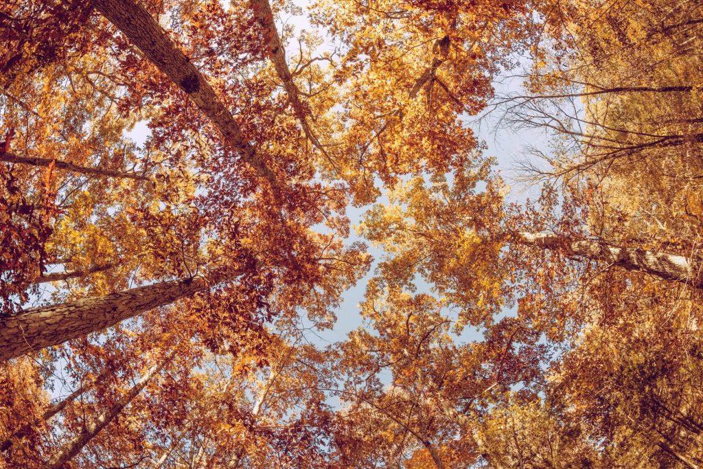 Csodahelyek-recept: 10 ok, hogy miért tölts több időt a természetben