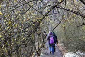 Kiránduljunk Budapesten! Séta a Széchenyi-hegyi Gyermekvasút mentén