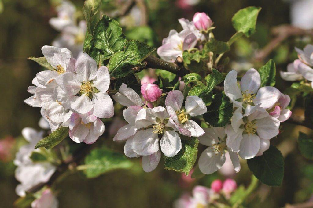 Csodahelyek Tavaszi Bakancslista – 25+ élmény, ami rád vár tavasszal!