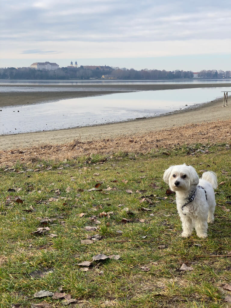 Kirándulás kutyával? – 15 úti cél Magyarországon, amit nem hagyhatsz ki!