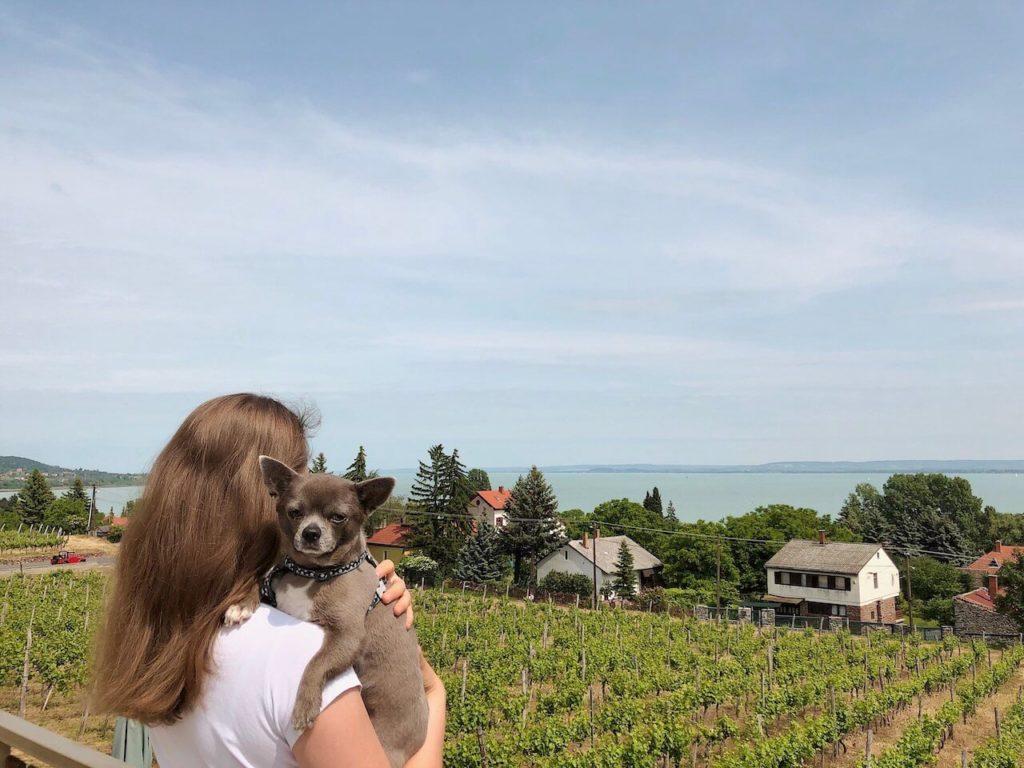 10 állatbarát szálláshely, amit a kutyák is imádni fognak