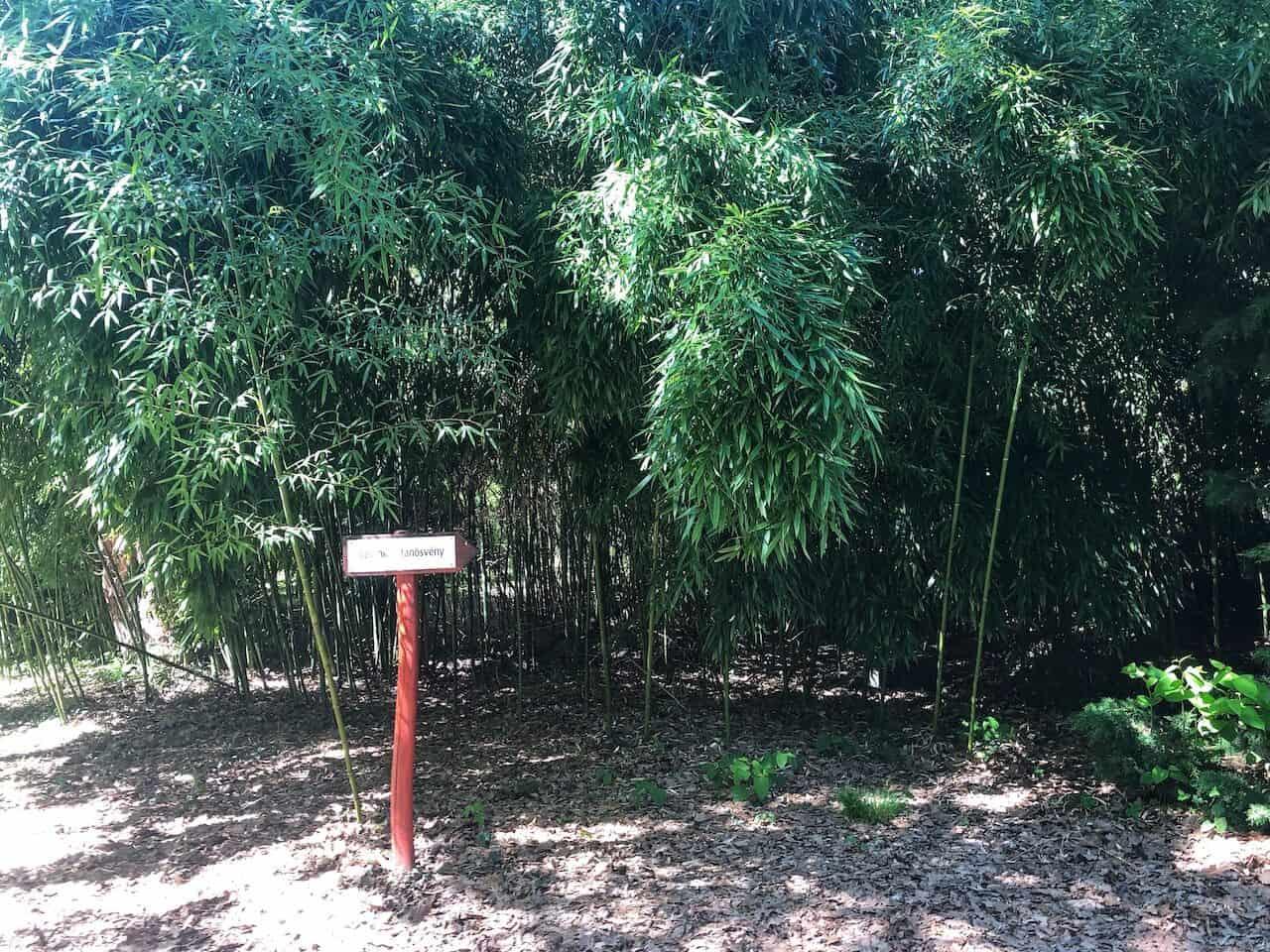 Séta a rododendronok között  - Kámoni arborétum