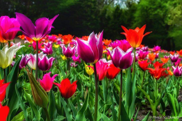 Tavasz a Vácrátóti Botanikus Kertben