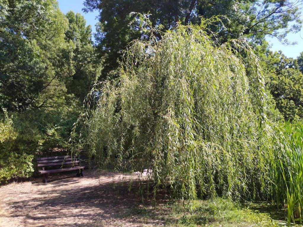 Pósteleki Szabadidőpark - Ahol kastélyrom, tavirózsák és őzgidák várnak!